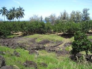 Nuʻalolo Kai3
